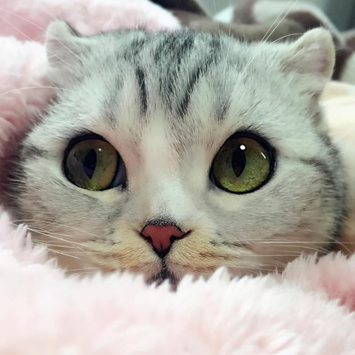 japonské mačiatko (5)