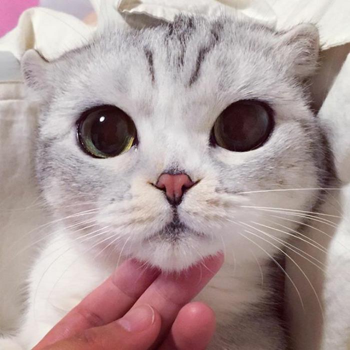 japonské mačiatko (8)