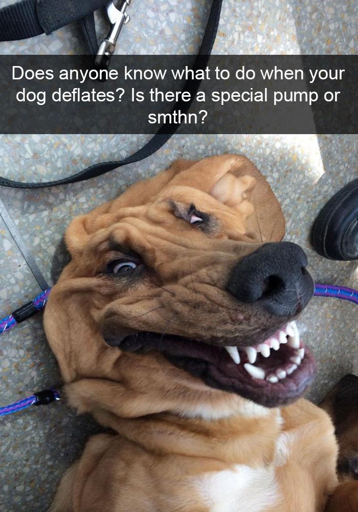psie Snapchaty (9)