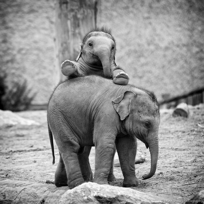 sloníčatá(1)
