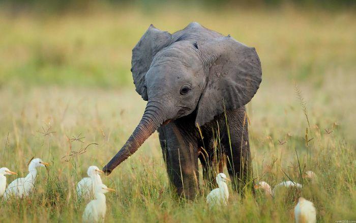 slonicata (2)