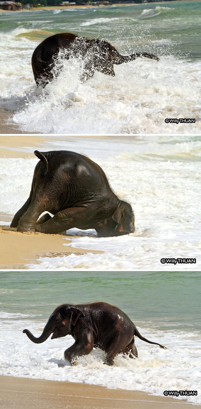 slonicata (5)