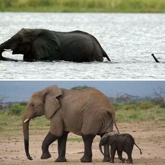 slonicata (6)