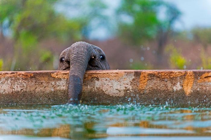slonicata (7)