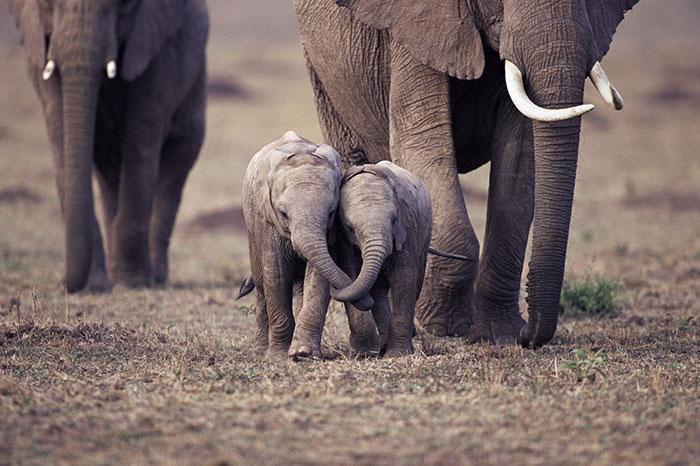 slonicata (8)