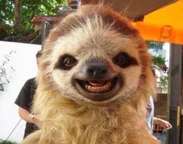cute-animals-smiling-016
