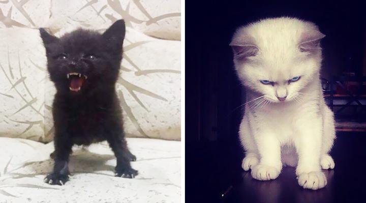 Naštvané mačiatka, s ktorými sa neradno zahrávať
