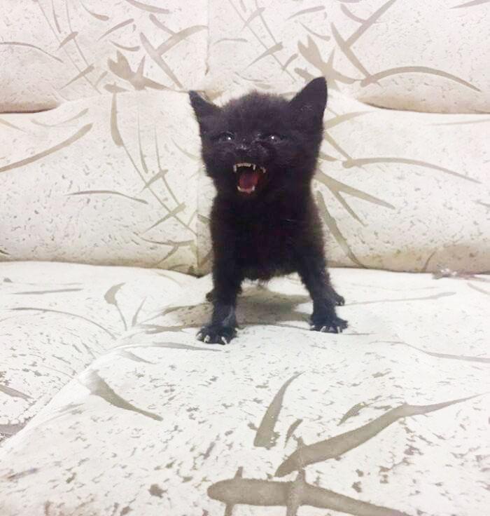 naštvané mačiatka (2)