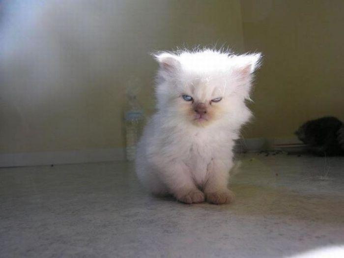naštvané mačiatka (6)