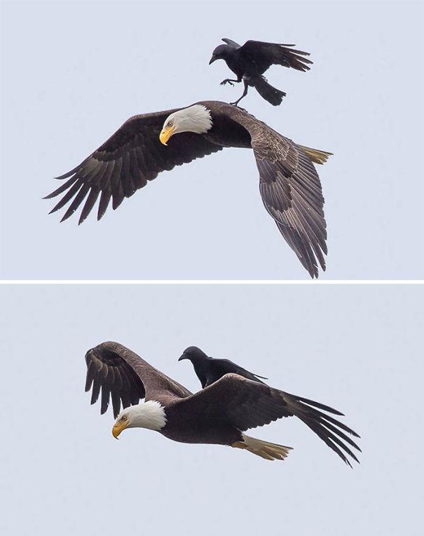 zle vrany (1)