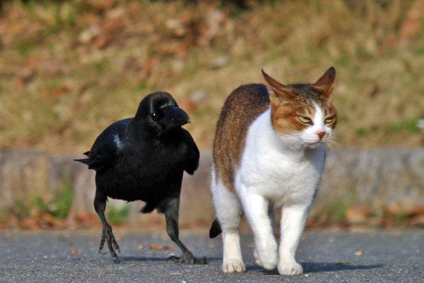 zle vrany (2)