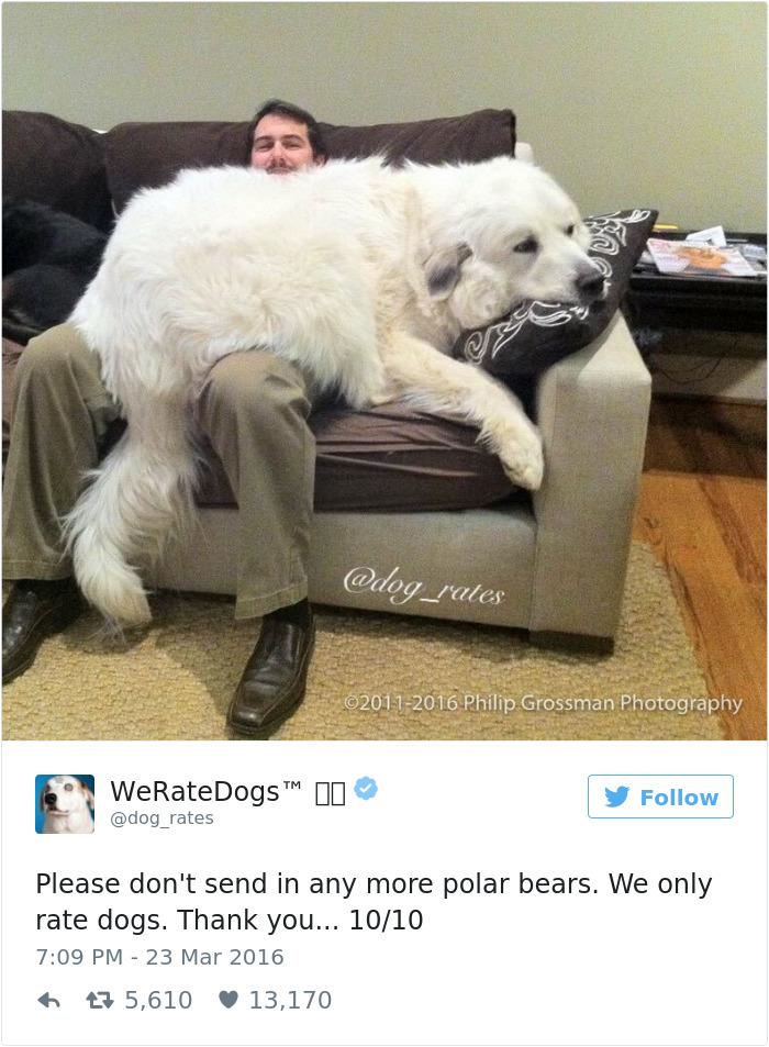 ohodnoťte môjho psa (4)