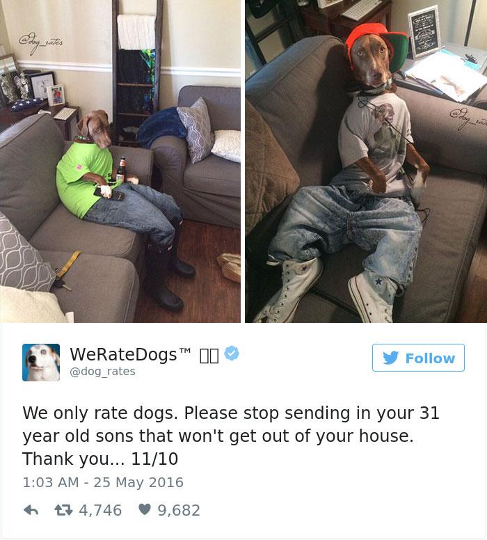 ohodnoťte môjho psa (6)