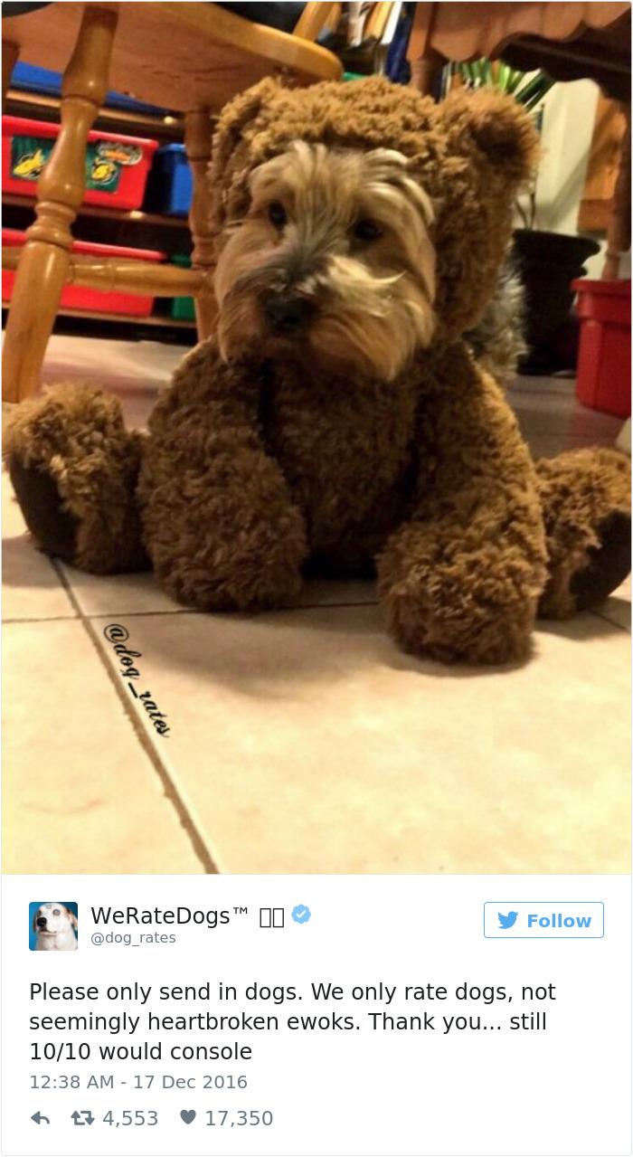 ohodnotte mojho psa (8)