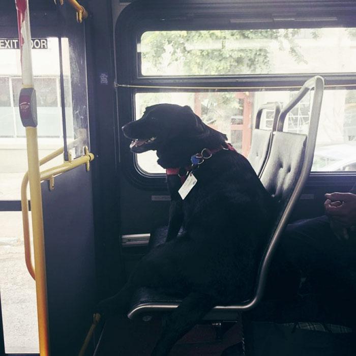 pes v autobuse (1)