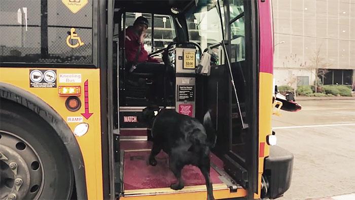 psík sa vozí v buse (2)