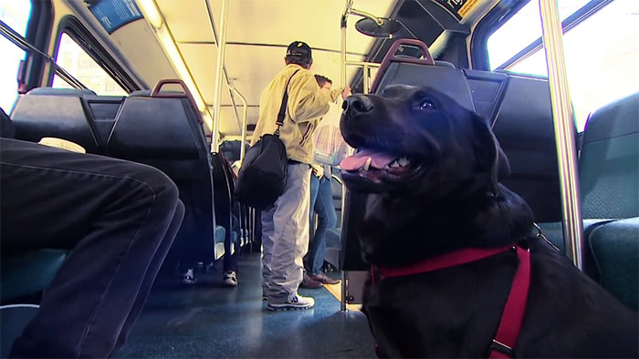 pes v autobuse (3)