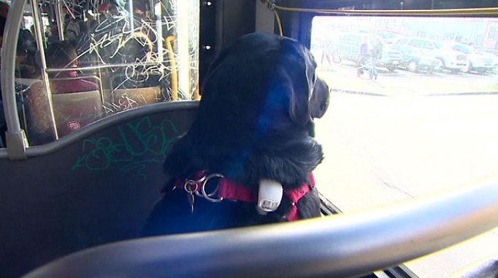 psík sa vozí v buse (4)