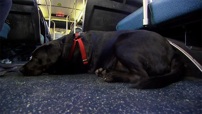 pes v autobuse (5)