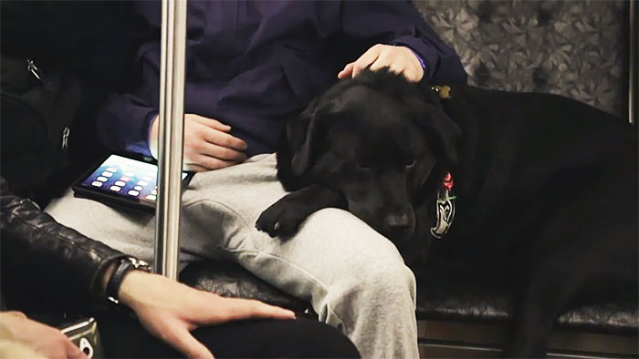pes v autobuse (6)