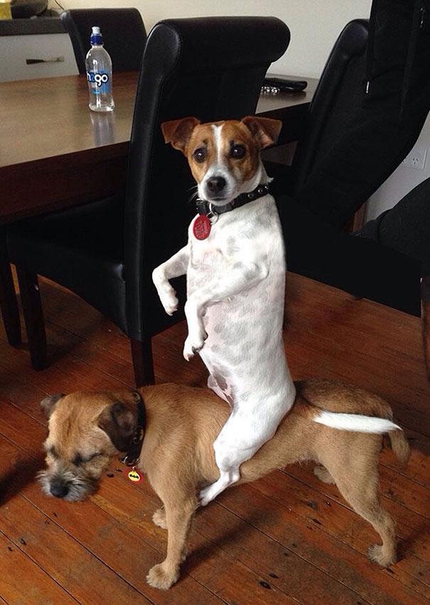 zvlastne psy (1)