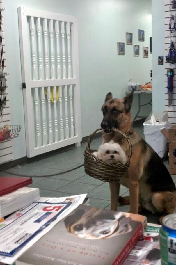 psy sa chovajú zvláštne (10)