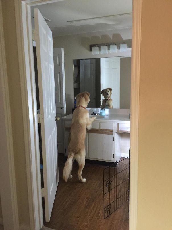 zvlastne psy (13)