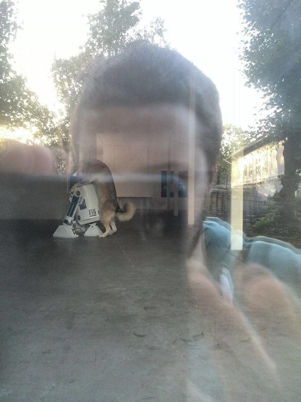 zvlastne psy (7)
