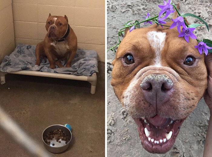 adoptovaní psíci (2)