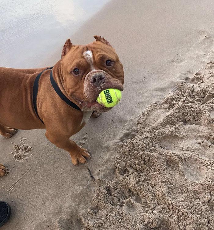 adoptovani psi (4)