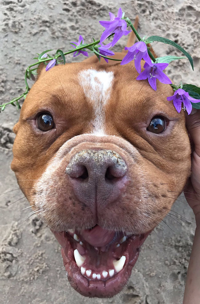 adoptovani psi (5)
