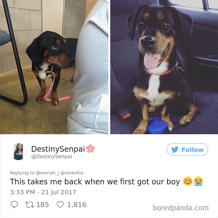 adoptovani psi (7)