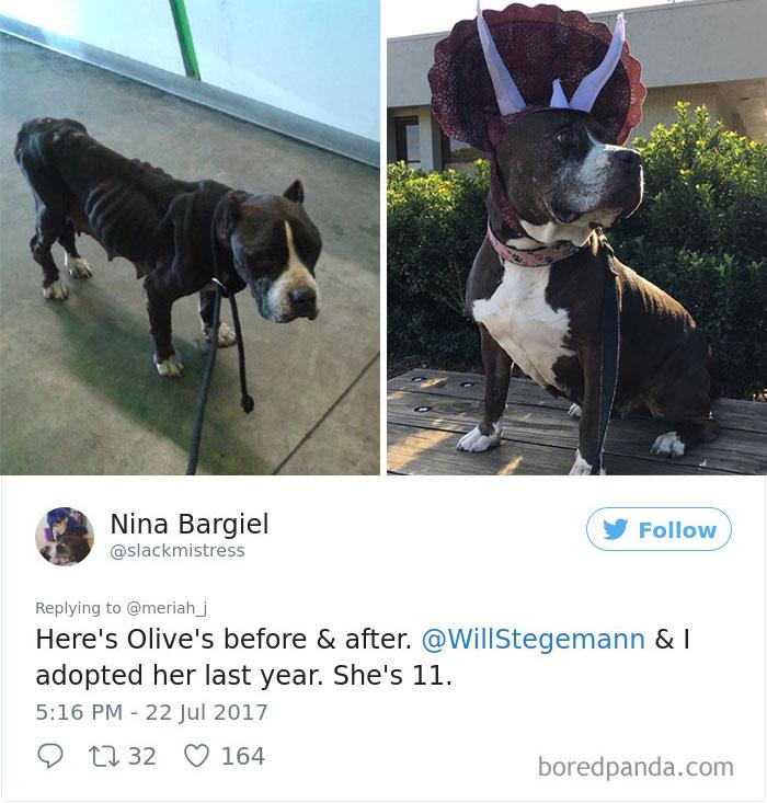 adoptovani psi (8)