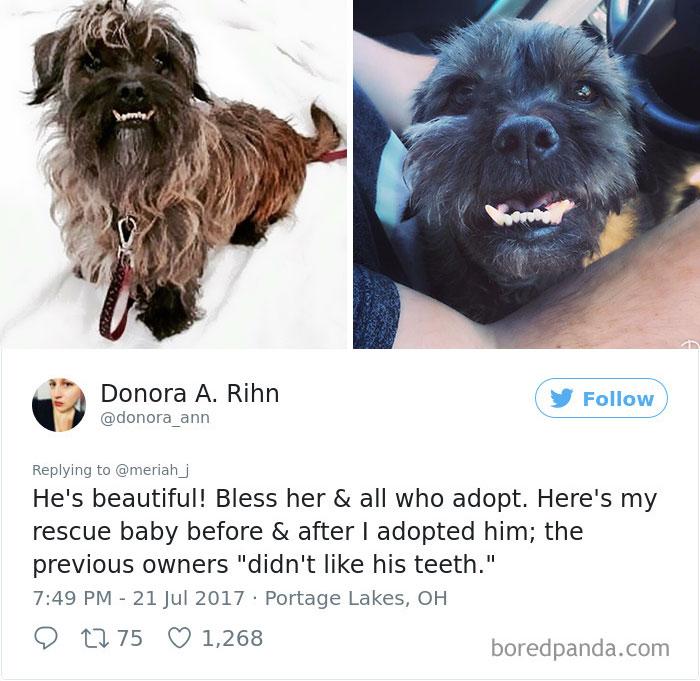 adoptovaní psíci (9)