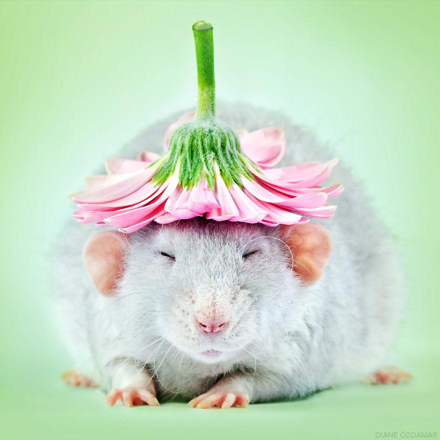 mile potkany (1)