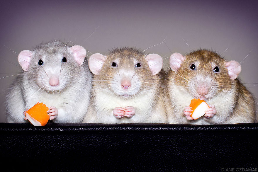 mile potkany (2)