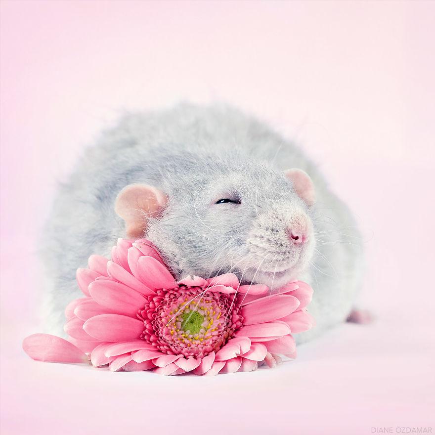 mile potkany (3)