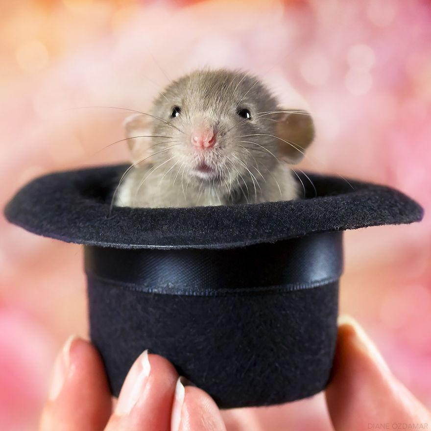 mile potkany (4)