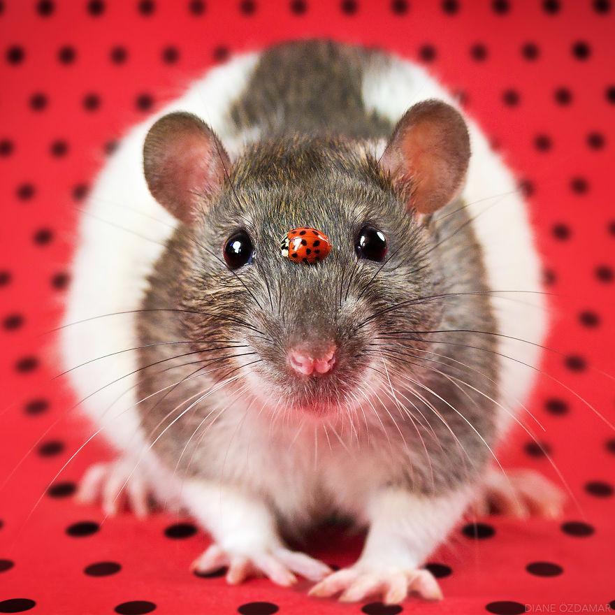 mile potkany (6)