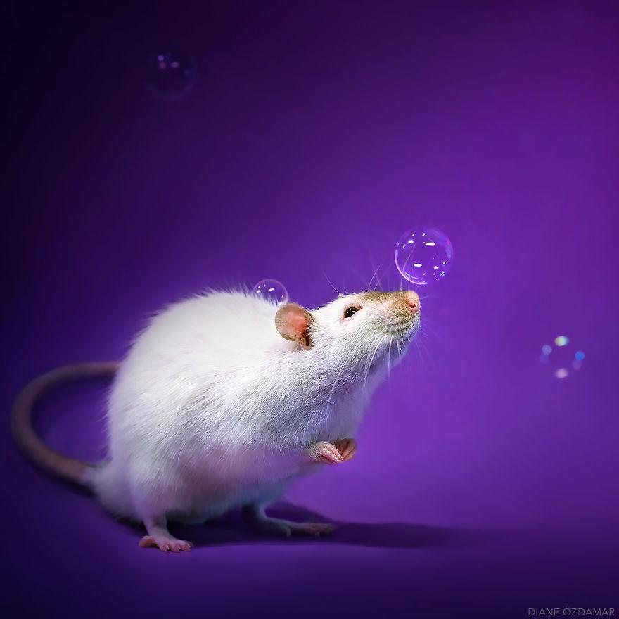 mile potkany (7)