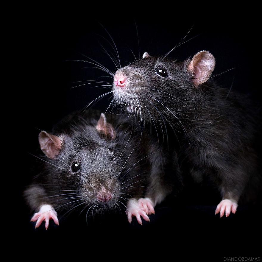mile potkany (9)