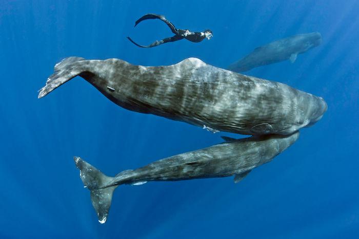 spiace velryby (7)