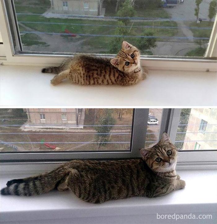 mačičky pred a po (3)