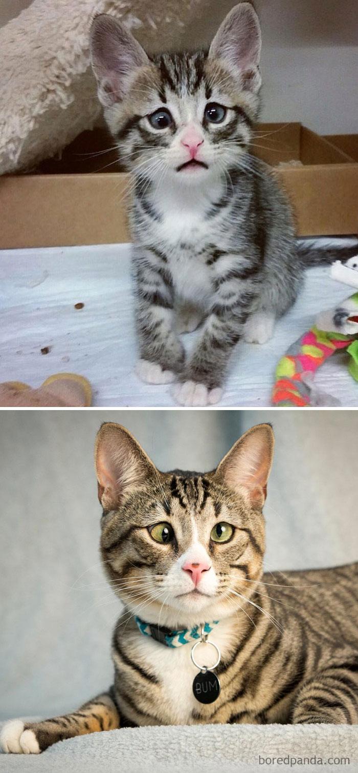 mačičky pred a po (6)