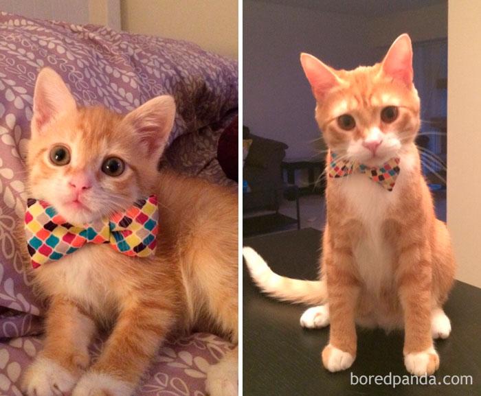 mačičky pred a po (8)