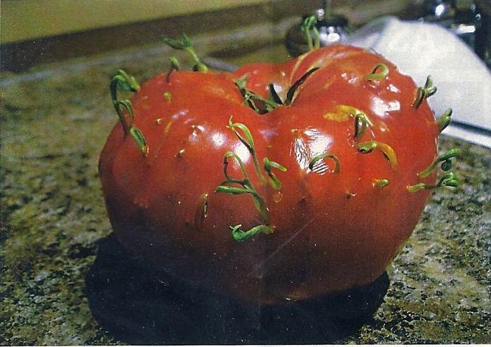 ovocie a zelenina (1)