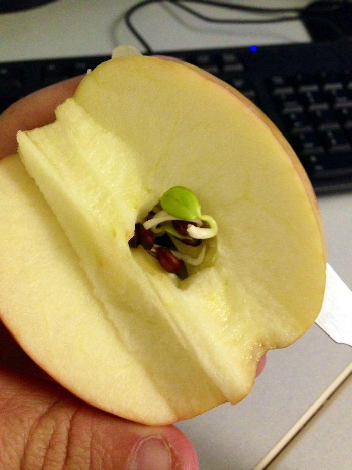 ovocie a zelenina klíči (2)