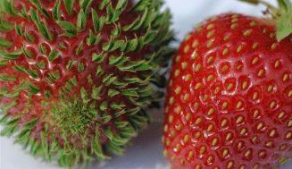 Zastrašujúce fotky ovocia a zeleniny rastúce príliš skoro