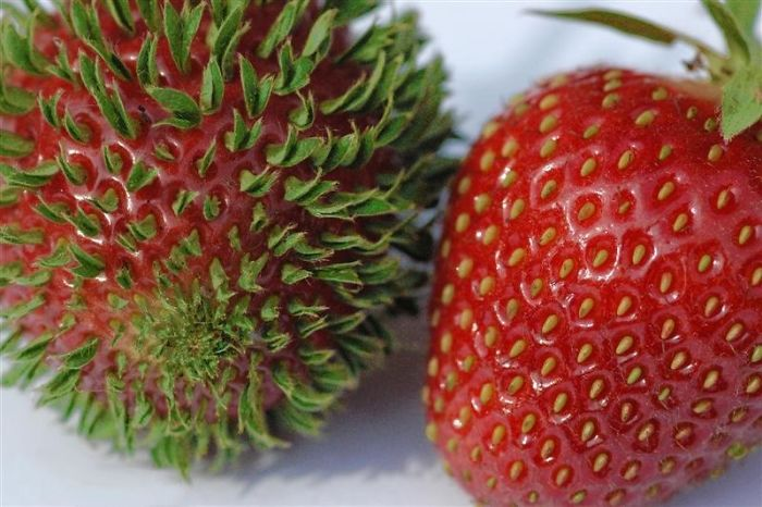 ovocie a zelenina (9)