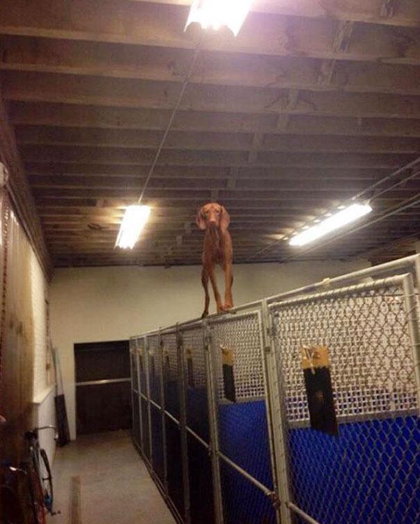 psy si myslia ze su macky (10)